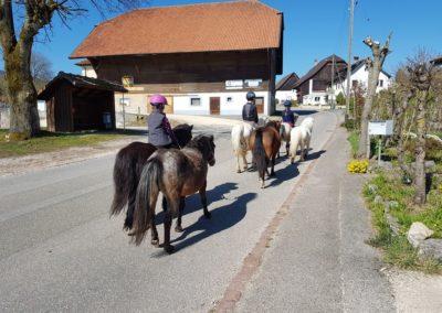 6 chevaux guidés par 2 personnes