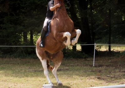 Une personne sur un cheval