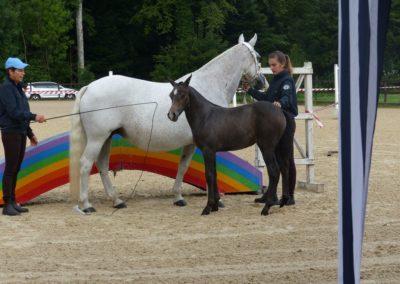 2 chevaux et 2 personnes