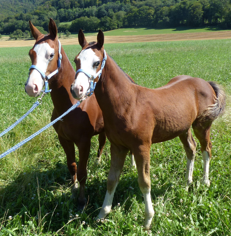 deux mules